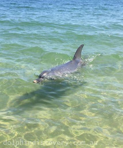 Bunbury Dolphin Interaction Zone
